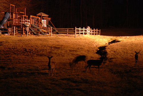 Pocono Deer Night