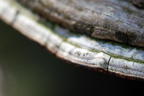 Poconos Tree Fungus